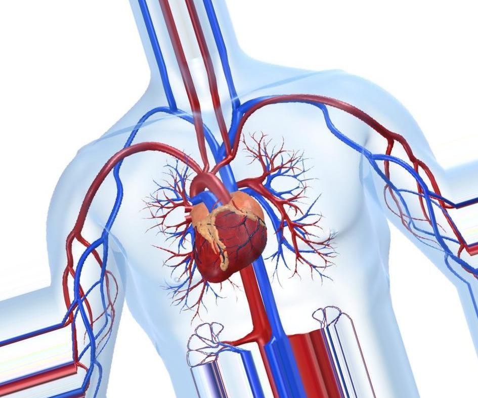 Можно ли самостоятельно распознать симптомы ишемической болезни сердца